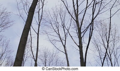 Bare tree branches against the sky - bare tree branches...