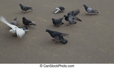 Pigeons eating crumbs in the park in spring