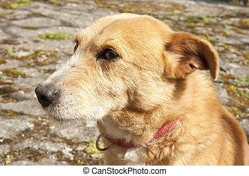 little dog mutt
