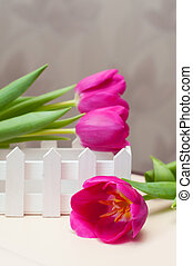 Three violet tulip and little decorative white fence.