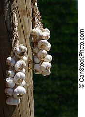 garlic for sale - Plaits of fresh garlic await customers at...