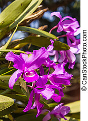pink orchid on nature background