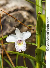 white orchid on nature background