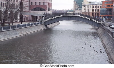 some ducks swim in the Moscow River