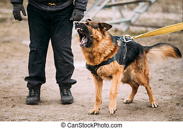 German Shepherd Dog training Biting dog - Barking Angry...