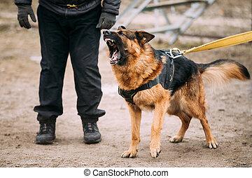 German Shepherd Dog training Biting dog - Barking Angry...