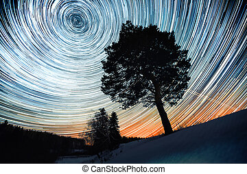 Starry sky - Star trails in a winter sky and pine tree in a...