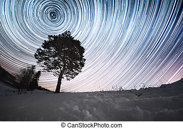 Star trails in a winter sky and pine tree in a snowy field