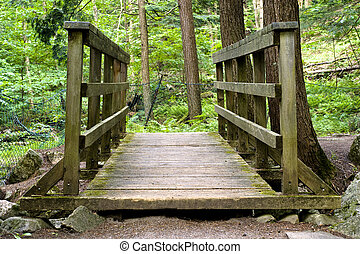 Small Wooden Bridge in Forest - A small, wooden bridge in...