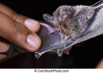 """bat is mammal and call """"vampire"""" - Bats are sleeping in the..."""
