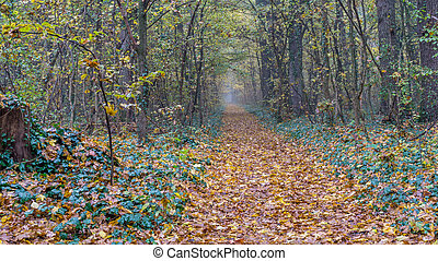 forest pathway