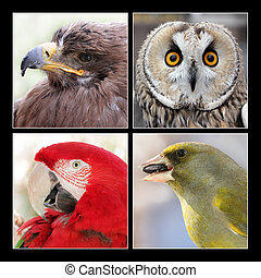 Set of four birds - Set of four different beautiful birds -...