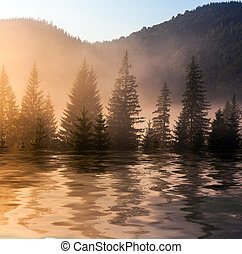 Beautiful sunset, tre reflected in still waters of lake