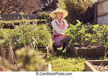 Senior woman checking on her raised vegetable food garden -...
