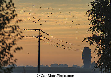 Starlings resting on a wire, sunrise, silhouettes of flying...