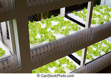 Hydroponics rack for lettuce