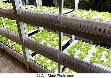 hydroponic, plantation,