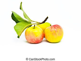 Three beautiful ripe apples with leaves on a white background
