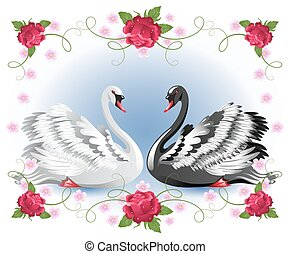 White and black swans with floral roses ornament - Elegant...