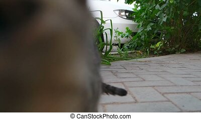 Cat sniff camera and go away 4k footage.