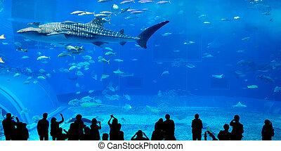 Silhouettes of people in Oceanarium