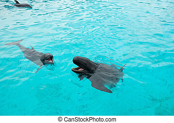 Dolphin and Whale with the head above water