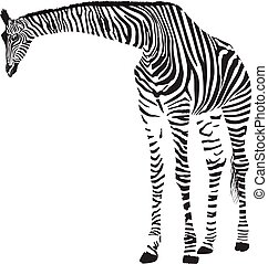 Giraffe in the Zebra camouflage