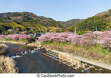 Kawazu riverside with cherry tree