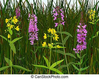 Wet meadow flowers - Three species of wet meadow flowers:...