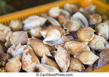 fresh cockles for sale at the market, shellfish