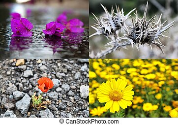 four seasons - Collage of flowers in four seasons: spring,...