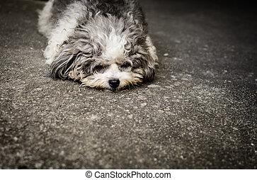 Shabby doggy is lie down on the street - Homeless shabby...