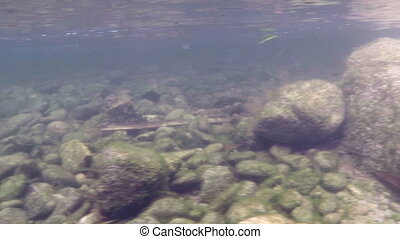 Rocky river bottom - Underwater shot of a rocky river bottom...