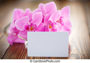 Beautiful purple phalaenopsis flowers on a wooden table