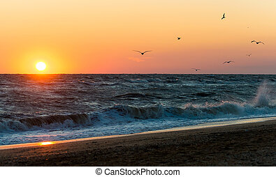 Sunrise during a storm on the Sea of Azov. Pack of seagulls...