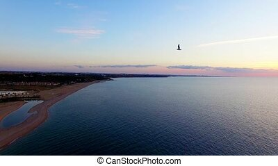 Several Birds Flying Over Beach At Sunset - AERIAL VIEW....