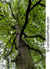 deciduous and treetop, symbolizing growth, life, nature,...