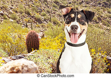 Happy Dog Hiking in Arizona Desert - Happy and smiling mixed...