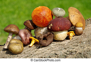 Different types of mushrooms on green background