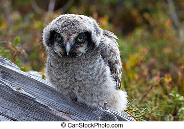 Cute fluffy owlet looking at the viewer with their yellow...