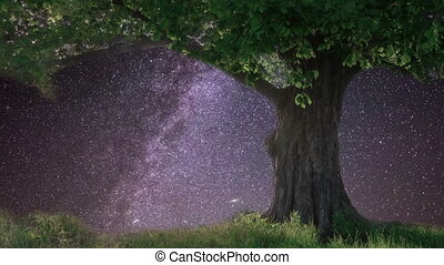 Lonely oak under starry sky.