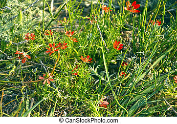 Close up of green grass with flowers - Sunny background of...