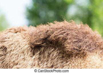 camels hump