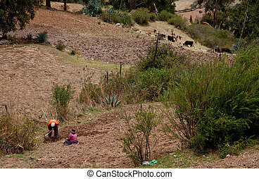 Agriculture in the Andes of Peru, South America