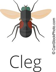 Cleg skin parasite insect bug Bug insect Cleg isolated on...