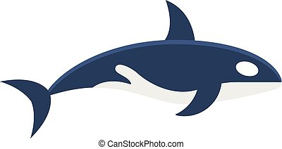 Killer whale Orcinus orca isolated on white background -...