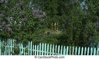 Churchyard View of graves among lilac bushes - Churchyard...