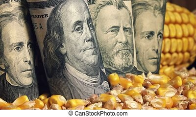 Corn harvest profit in USA, american dollar banknotes in...