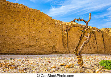 Fancifully curved tree - The stone desert in the...