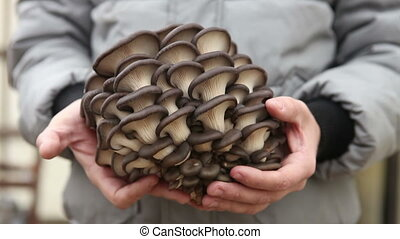man holding a large oyster mushrooms HD